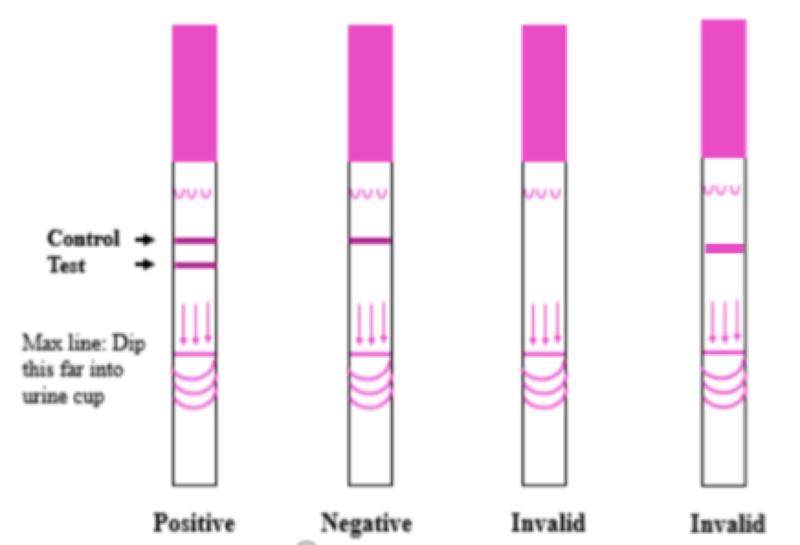 hCG urine testing strip results reference image.